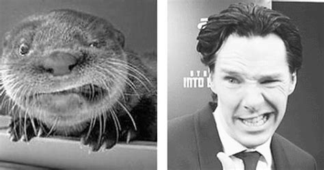 Cumberbatch Otter Meme - well nailed it now otters are just mocking him nerd