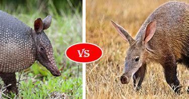 aardvark  armadillo fight comparison  win  animals animal facts armadillo