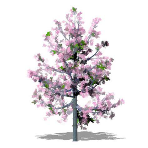 cherry blossom tree 3d model free cherry tree 3d model formfonts 3d models textures