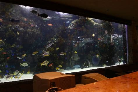 Fish Tank Reception Desk 8 Best Images About Additional Scope On Aquarium Decorations Fish Tanks And Glass