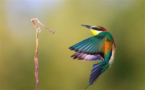 colibr fondos de pantalla 1920x1200 432 pajaro colibri imagenes wallpapers animales fondos