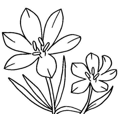 gumamela flower coloring page hibiscus flower coloring pages for kids gumamela flower