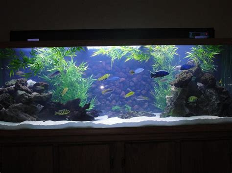 Freshwater Aquarium Design Ideas by Freshwater Aquarium Design Ideas