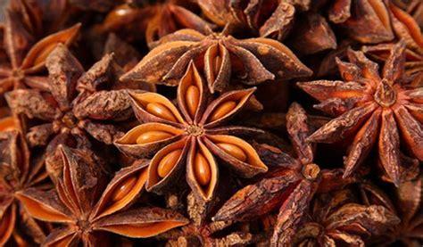 Pekak Bunga Lawang 6 jenis rempah yang hanya bisa ditemukan di indonesia