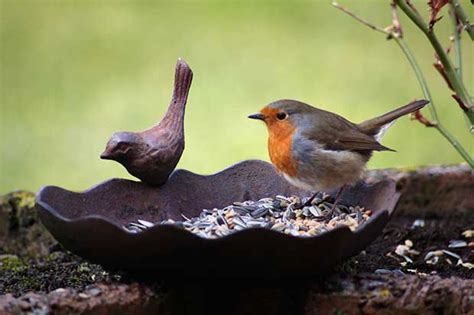 bird food british bird lovers