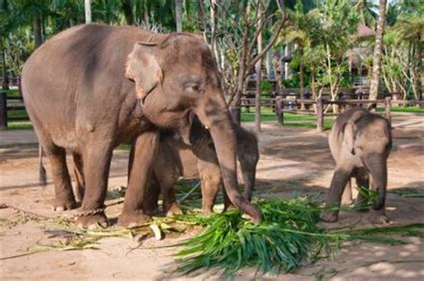 les excursions  bali singes  elephants indonesie