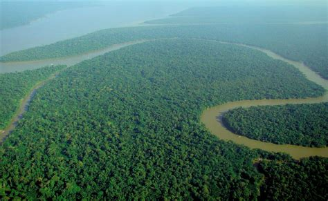 amazon wikipedia indonesia tropical rainforest wikipedia