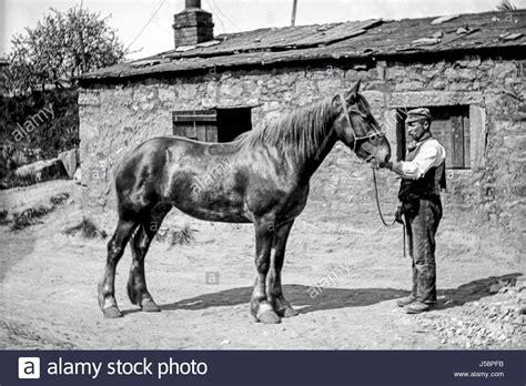 horse outside 100 horse outside dodson u0026 horrell chatsworth