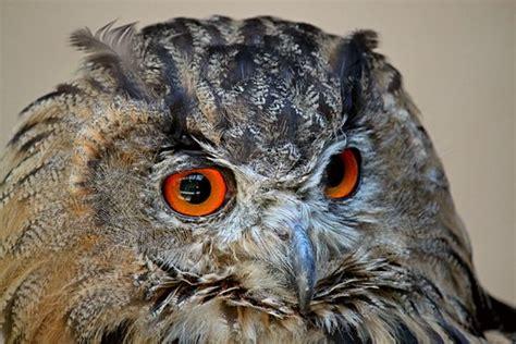 tato owl keren gambar seniman karya gambarnya luar biasa keren gambar