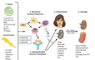systemic lupus erythematosus disorders of immune mediated