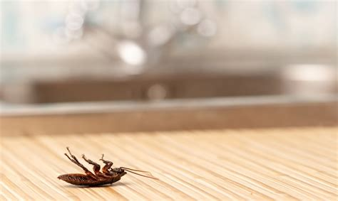 insetti da casa insetti in casa come eliminarli con metodi naturali