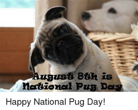 when is national pug day 25 best memes about pang pang memes