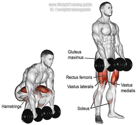 dumbbell swing muscles worked dumbbell deadlift exercise guide and video weight