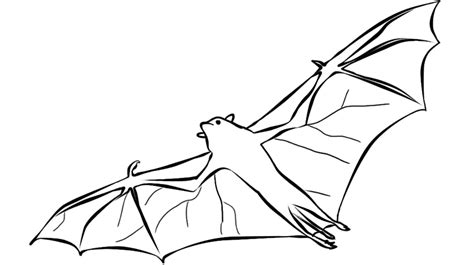 bat boat coloring page bat coloring pages free printable bat coloring pages
