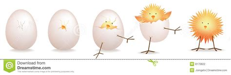 5 stages of chick baby bird hatching stock photography