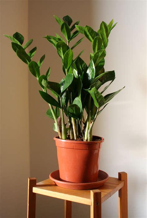 pflanzen mit wenig licht mit bergpalme und einblatt durch die dunkle jahreszeit