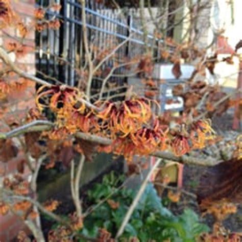 Garden Sphere Tacoma by Gardensphere 27 Photos 33 Reviews Nurseries
