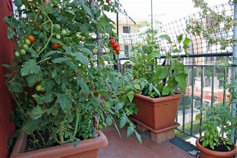 Apartment Gardening Lettuce Contribute To Easton S Recycle Garden Crossroads