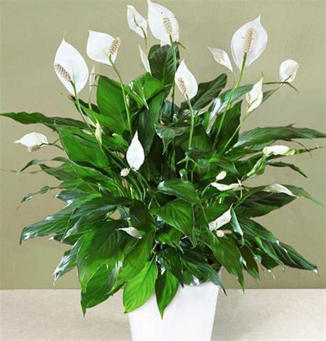 zimmerpflanzen schlafzimmer pflegeleichte zimmerpflanzen im schlafzimmer sorgen f 252 r ruhigen schlaf