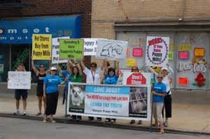 puppy store chicago chicago pet store ban city to ban sale of pets in pet stores