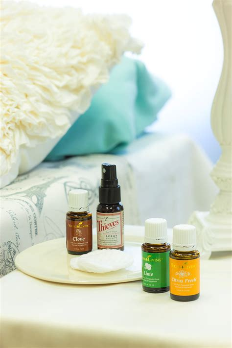 essential oils bed bugs bed bug bites in infants treatment and prevention