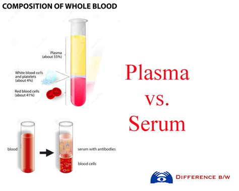 Serum The blood serum related keywords blood serum