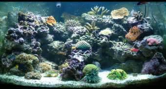 saltwater aquariums aquarium cares