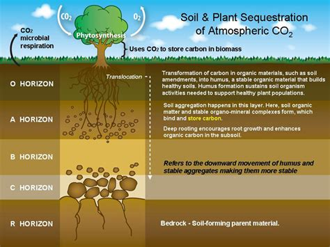 Soil Cross Section by Land Resource Management Introduction To Soil Sst 5201