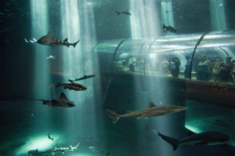 oregon coast aquarium map the 12 best aquariums in the u s for 2017 tripping