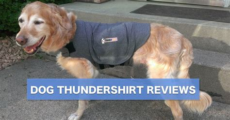 thundershirt for dogs reviews thunder shirt for dogs t shirts design concept