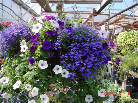container gardening flowers discover the of hanging flower baskets container