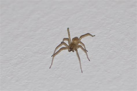 jumping house spiders file house spider 6894878141 jpg