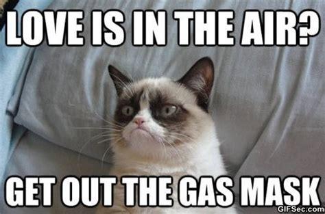 Grumpy Cat Memes Funny - meme grumpy cat 4 jpg