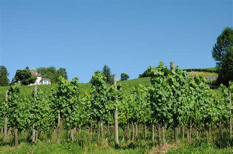 giardini curati awesome i vigneti curati come giardini producono uve di