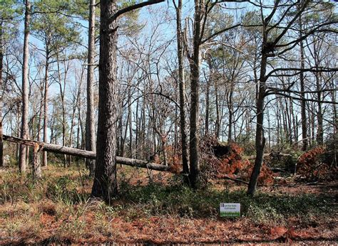 Robin Nw 2477 Robin Nw Circle Longwood Nc 28452 For Sale Re Max