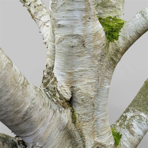 Paper Tree - 3d model paper tree 3d scan vr ar low poly obj