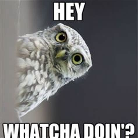 Happy Birthday Owl Meme - 1000 images about funny on pinterest funny owl pictures