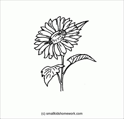 Outline Of Sunflower To Colour by Outlines Of Flowers Coloring Home