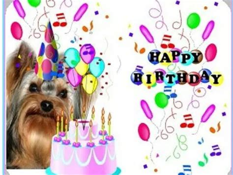 happy birthday yorkie images 180 best images about birthday on happy birthdays happy birthday
