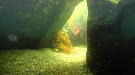 u boat maximum dive depth german u boat castle beach falmouth youtube