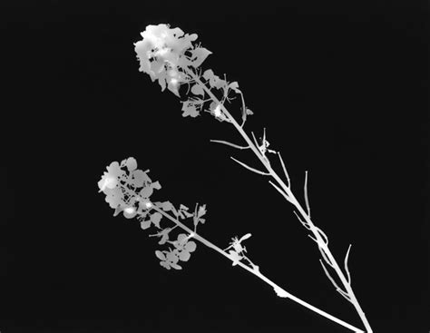 Photogram Photographers by Photogram Research Huynh Photography
