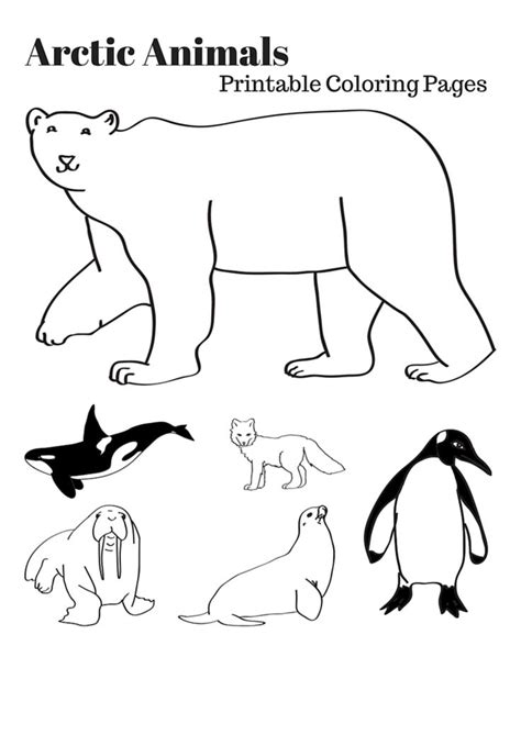coloring pages arctic animals arctic animals free colouring pages