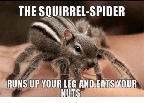 Squirrel Nuts Meme - 25 best memes about squirrel spider squirrel spider memes