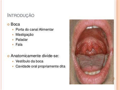 vestibulo oral que es anatomia bucal