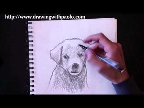 drawing  dog  paolo morrone youtube
