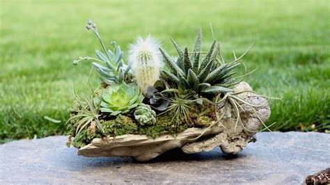 Plants In Planters by Rock Planter W Succulents Air Plants Cacti