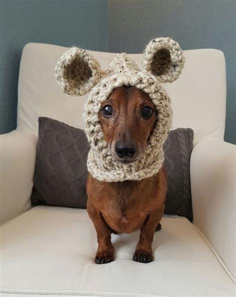 sausage dog wearing headgear  ears luvbat