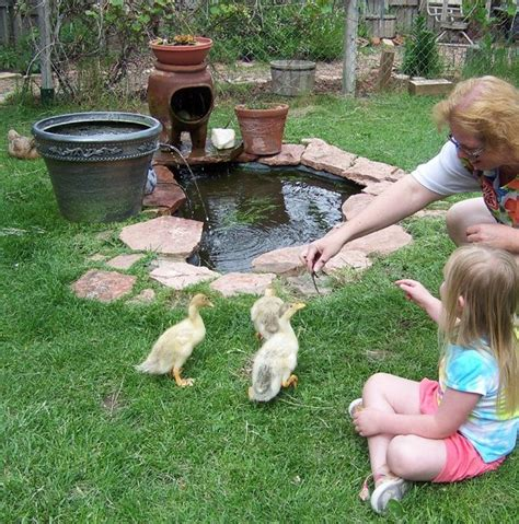 ducks in backyard 437 best images about small garden ponds on pinterest