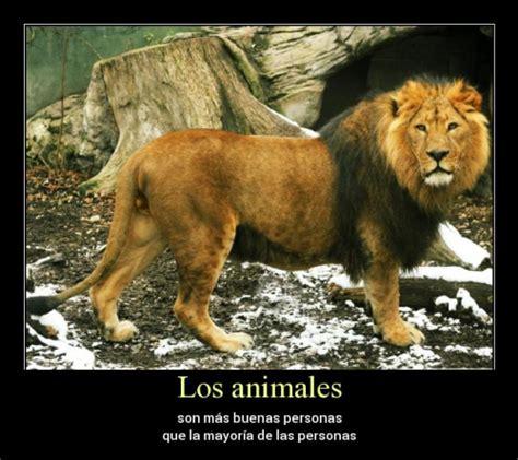 imagenes de animales con frases bonitas hermosas frases con im 225 genes de animales para facebook