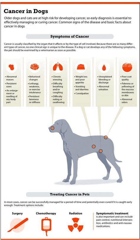 symptoms in dogs bone cancer in dogs symptoms causes treatments and care methods